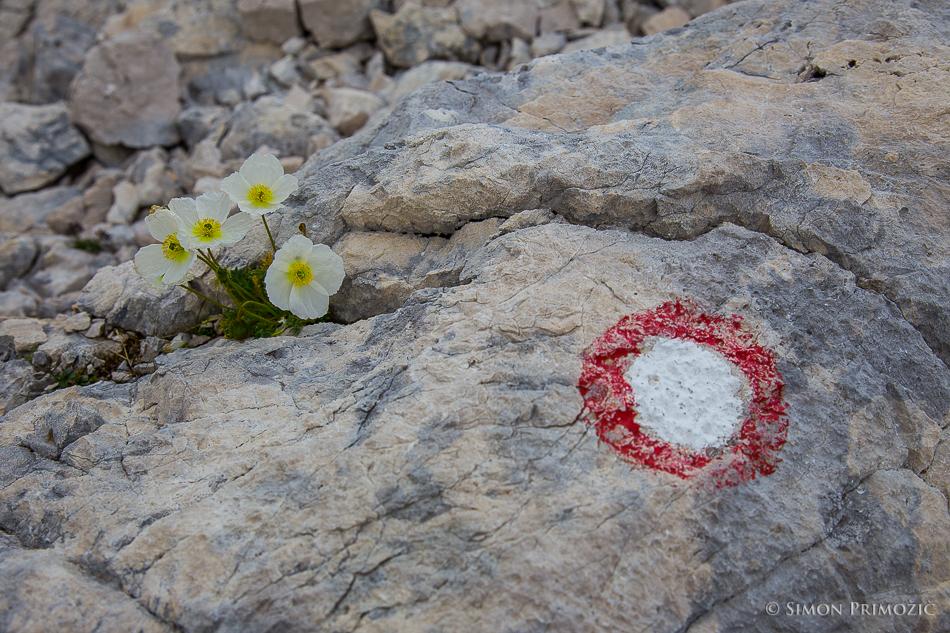 Rdečih markacij tu ne manjka, prav tako ne cvetja, ki najde svojo pot za rast